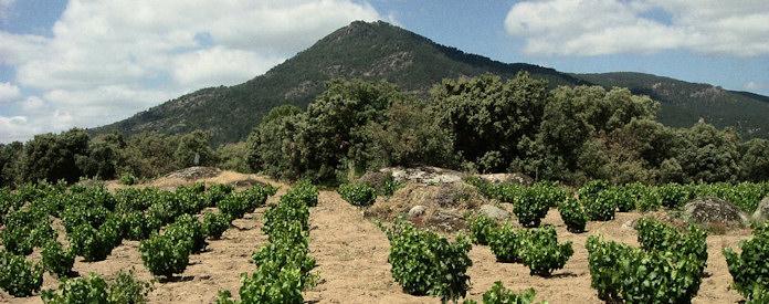 bernebeleva-wine-696x275-2